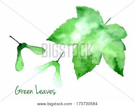 Set of green vector abstract watercolor maple leaf and seeds isolated on white background