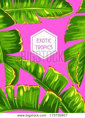 Background with banana palm leaves. Decorative tropical foliage.
