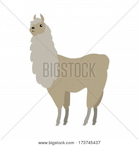 Lama flat style vector. Wild and domesticated animal. South America fauna species. For nature concepts, children s books illustrating, printing materials. Isolated on white background
