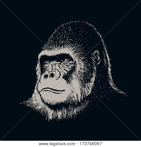 gorilla portrait face hand drawn style.Isolated on black background.Vector illustration