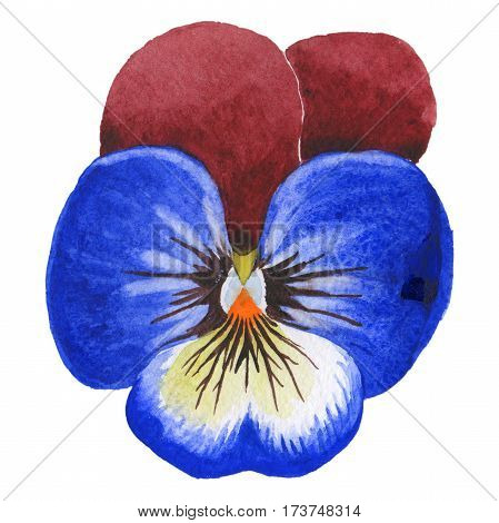 Wildflower viola flower in a watercolor style isolated. Full name of the plant: viola. Aquarelle wild flower for background, texture, wrapper pattern, frame or border.