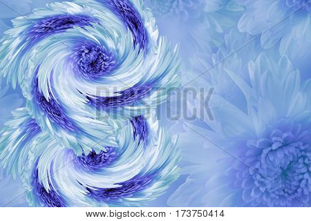 flowers on blurry white-blue-turquoise background. Blue-white-violet flowers chrysanthemum. floral collage. Flower composition. March 8. Nature.