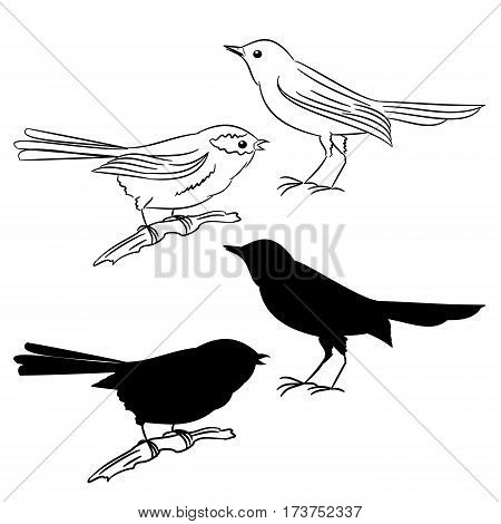 The outline and of the silhouette of the birds set The two vecto