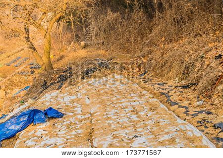 Rural landscape with blue and white tarp covering ground in front of a large leafless tree in a rural setting