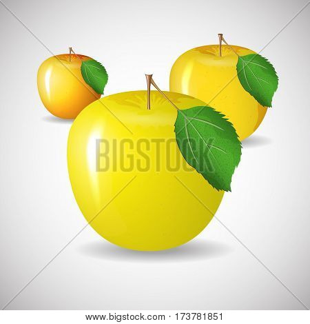 Juicy ripe apple yellow color in vector format