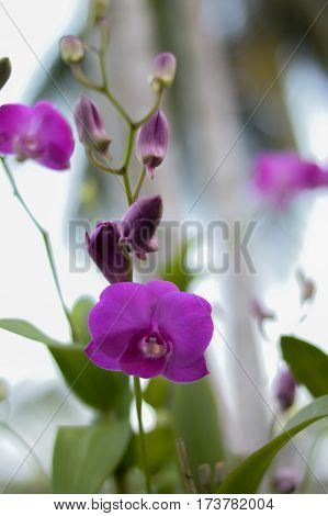 Purple orchids orchid is the queen of flowers. Orchids tropical in nature.