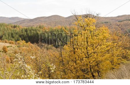 Landscape with hills and yellow trees in autumn recorded in region Stara Planina Bulgaria.