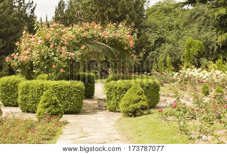 Rose garden recorded in University Botanic garden Ekopark in Saint Constantine and Helen resort Bulgaria.