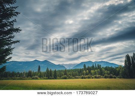 Image of a treelined meadow on an overcast day.