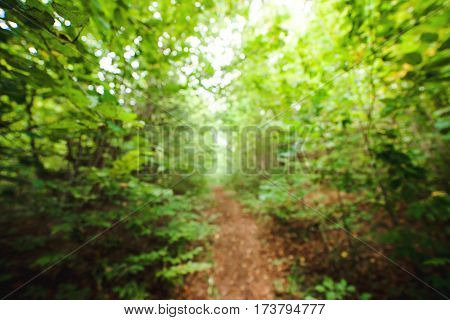 Abstract background with blurred green forest. Trees and leaves.