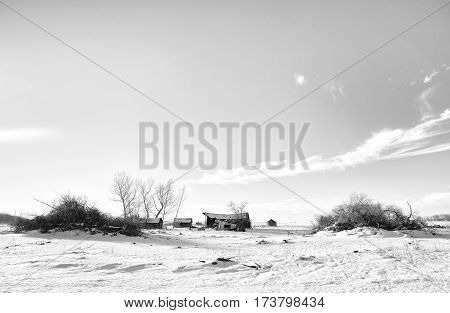 An abandoned crumbling old farm house and buildings between cut down pile of trees in a black and white rural landscape