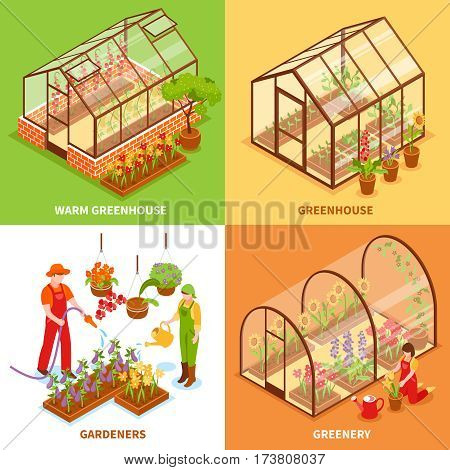 Four square isometric greenhouse design concept set with warm greenhouse gardeners and greenery descriptions vector illustration