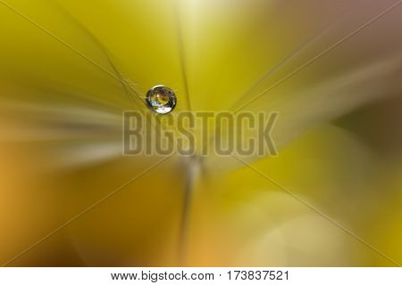 Abstract macro photo with water drops. Dandelion seed. Artistic Background for desktop.