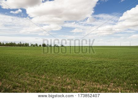 Flat meadow, green grass, blue sky, cumulus and stratocumulus, and some trees in the background.