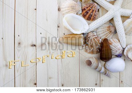 Seashells on wooden background with word Florida