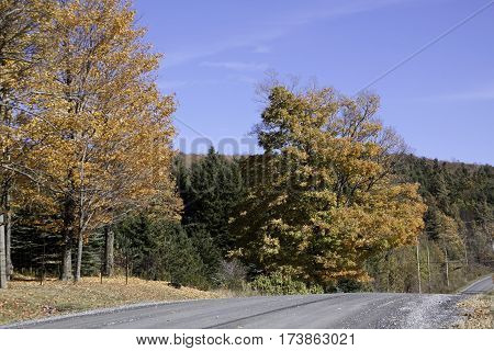 Wide wiew of gravel road running through the rural countryside with autumn trees of colorful fall foliage on a beautiful bright sunny day in October near the town of Frelighsburg in the Eastern Townships of Quebec.