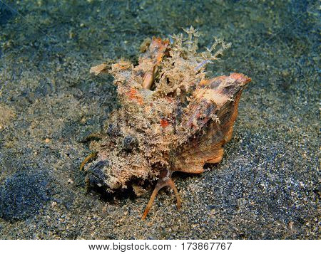 The surprising underwater world of the Bali basin, Island Bali, Lovina reef, frog fish