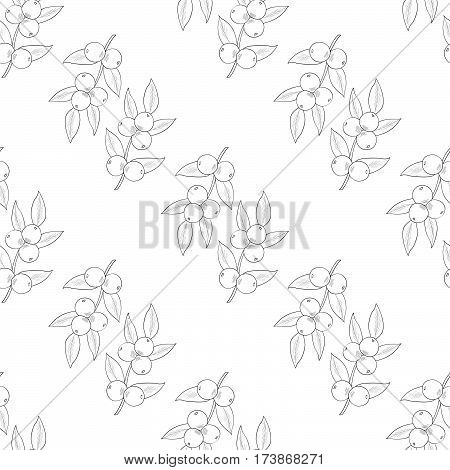 Camu camu berry fruit leaf branch. Superfood organic berry. Hand drawn sketch illustration. Seamless pattern.