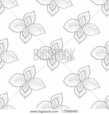 Mint peppermint fresh herb leaves plant hand drawn illustration. Sketch style. For traditional cuisine medicine treatment cooking gardening. Seamless pattern.