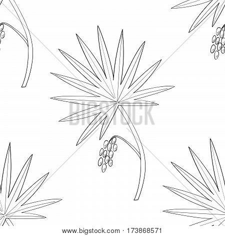 Saw Palmetto (Serenoa repens). Hand drawn botanical illustration. Medicinal tree. Seamless pattern.