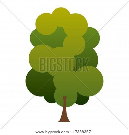 colorful silhouette green tree with several crown leaves vector illustration