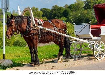 Horse in harness with a cart summer sunny day