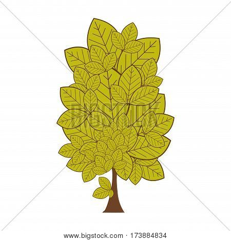 colorful leafy tree plant with several leaves vector illustration