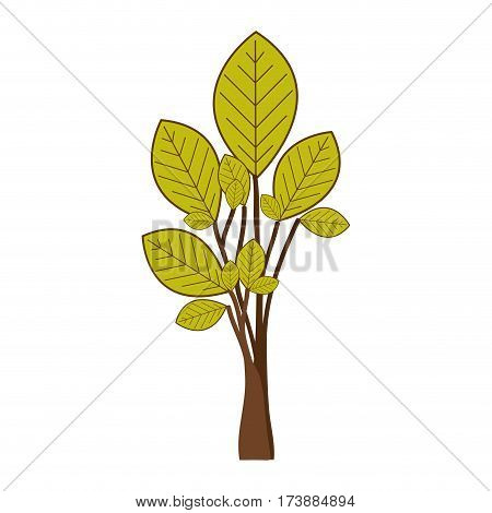 green tree plant with few leaves vector illustration
