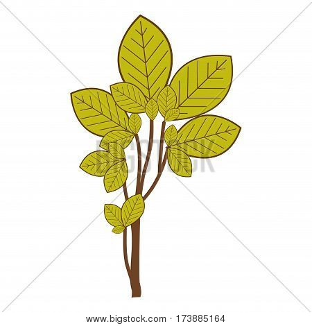 ramifications with green leaves nature icon vector illustration