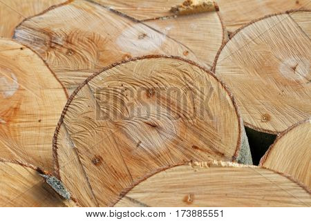 Timber Textures: Cross-Section of Freshly Felled Beech Trunks