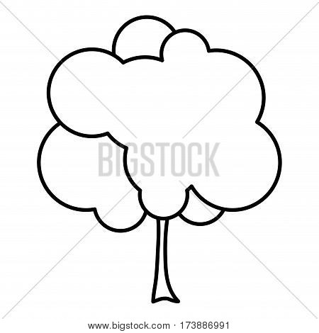 sketch silhouette small leafy tree with leaves vector illustration