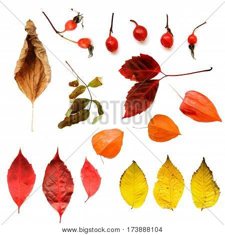 set of autumn leaves branches and berries isolated on white background