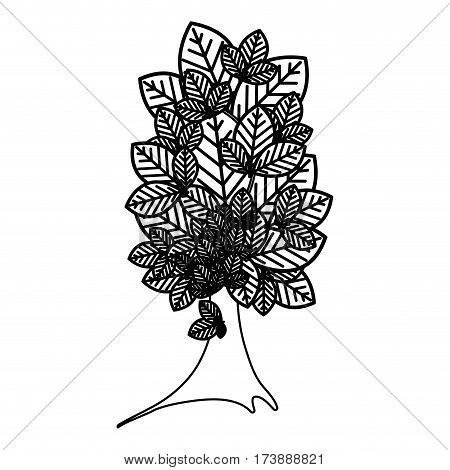 sketch silhouette tree plant with several leaves vector illustration