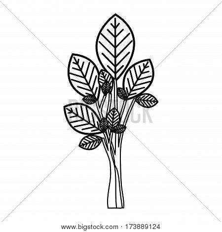 sketch silhouette tree plant with few leaves vector illustration