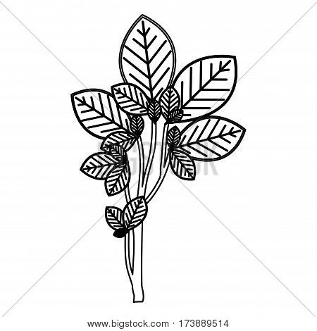 sketch silhouette ramifications with oval leaves nature icon vector illustration