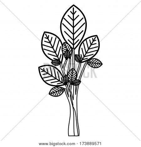 sketch silhouette ramifications with oval leaves plant icon vector illustration