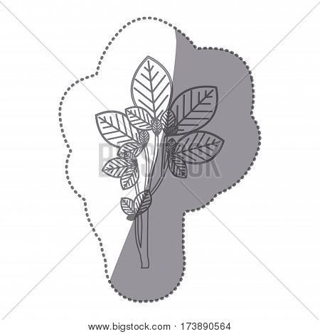 sticker gray color ramifications with oval leaves nature icon vector illustration