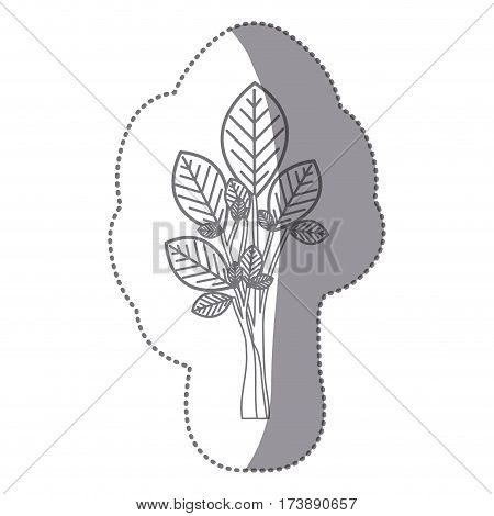 sticker gray color ramifications with oval leaves plant icon vector illustration