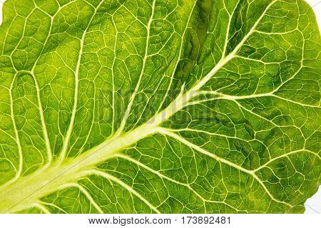Macro Shot Of Fresh Organic Romain Lettuce Salad Leaf