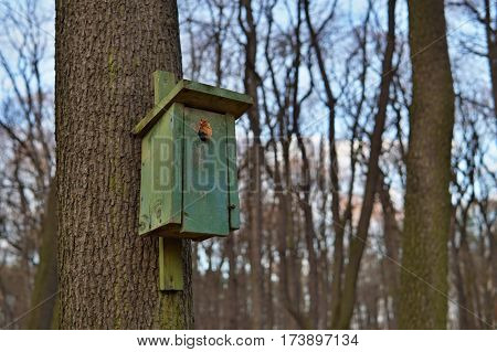 Green bird booth (bird house) hanging on a tree as a symbol of animal feeding and species protection of animals during the winter and cold periods