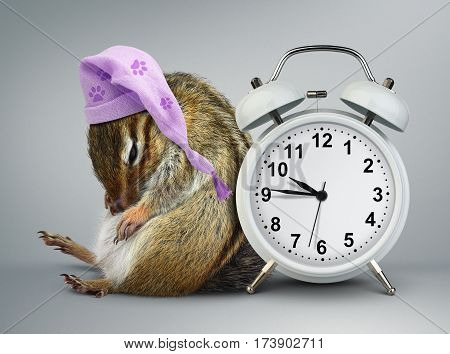Funny animal chipmunk wakeup with clock and sleeping cap
