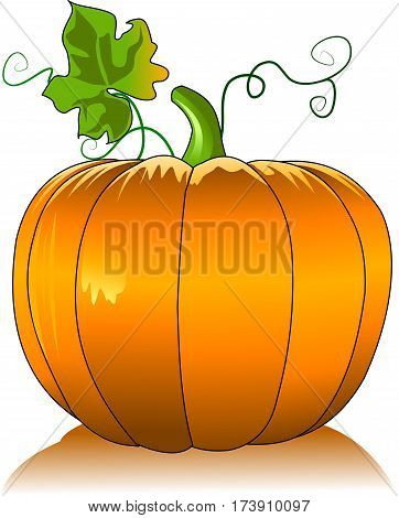 Vector - Vector orange pumpkin isolated on white background