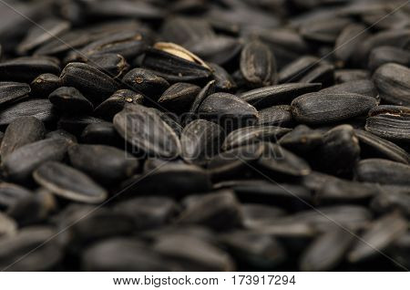 Closeup of heap of Sun flower seed background. Agriculture