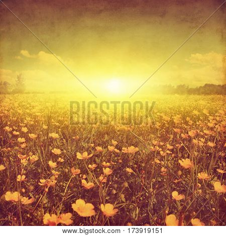 Spring field at sunset in grunge and retro style.