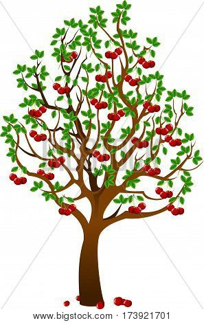 Vector - Cherry tree with berries and birds isolated on white background