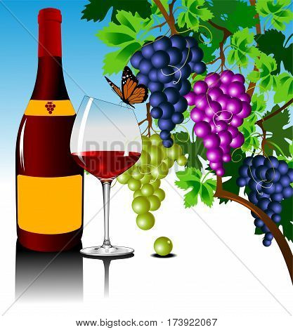 three grape bushes of different varieties of grapes vector