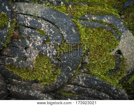 Close up Green Moss on Scaly dragon statue