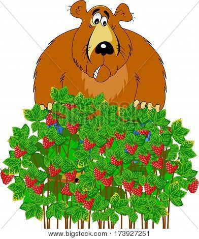 Red ripe fresh raspberries on a branch isolated on a white background. Vector illustration