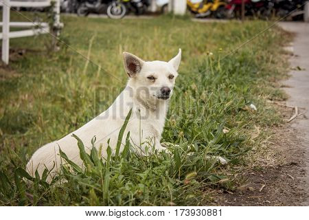 Small dog intent to play intrigued between the fresh grass of the farm