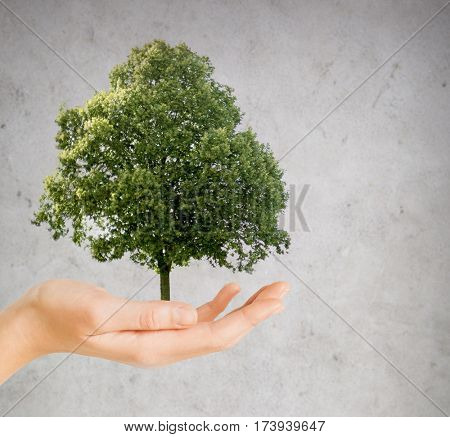 nature, conservation, environment, ecology and people concept - hand holding green oak tree over gray concrete background